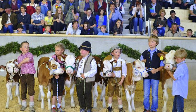 Rinderschau: 180 Kühe und Kälber werden ausgestellt