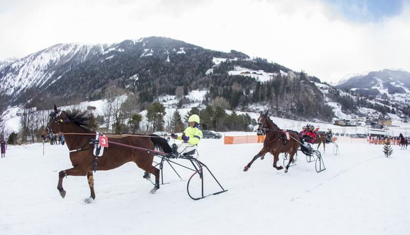 pferderennen_c_brunner-12