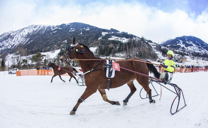 pferderennen_c_brunner-13