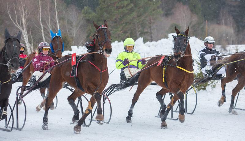 Pferderennen Heute