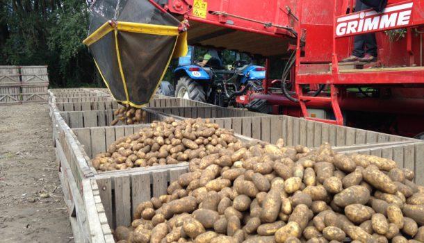 greilkartoffel-c-greil01