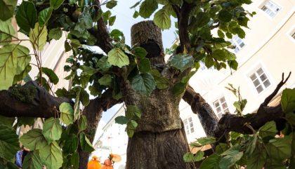 """Gigantische Baumwesen erwachten noch einmal inmitten des Publikums zum Leben und bezogen die Zuschauer in ihre fabelhafte Naturwelt mit ein. Groß und Klein wurden wie durch Zauberhand von den """"Living Trees"""" der Gruppe """"Ricoart"""" aus Deutschland in eine mystische Waldatmosphäre versetzt."""