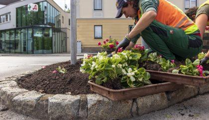 Stadtgaertnerei-Bepflanzung6_c-OsttirolHeute
